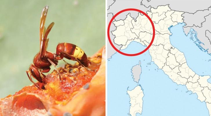 Invasione di insetti alieni a causa del caldo quali sono i rischi e come difendersi - Invasione di formiche in cucina ...