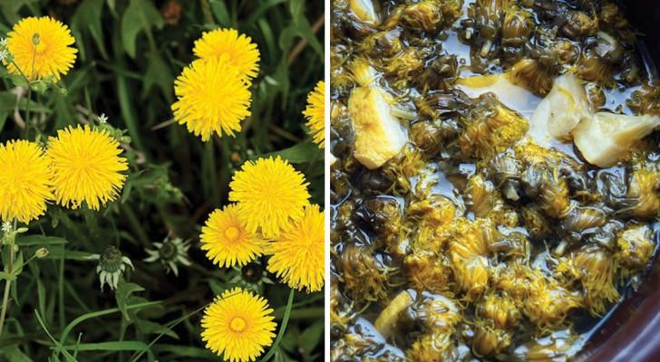 Il tuo prato è invaso da questi fiori? Scopri i mille benefici che puoi trarre dal Tarassaco