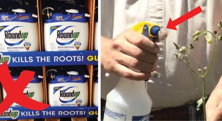 Witte azijn in de tuin: 6 trucs waardoor u vaarwel zult kunnen zeggen tegen chemische gifstoffen