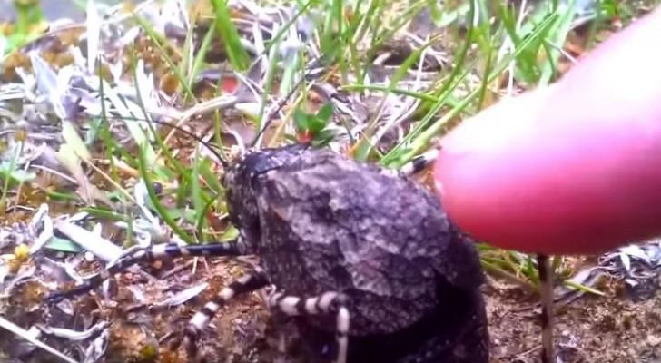 Il trouve un insecte jamais vu auparavant: quand il le touche, il découvre sa beauté inattendue