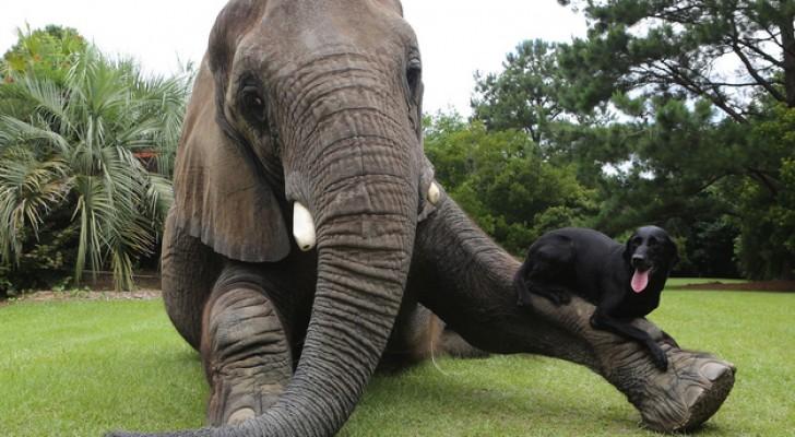 La amistad mas dulce y sin diferencias