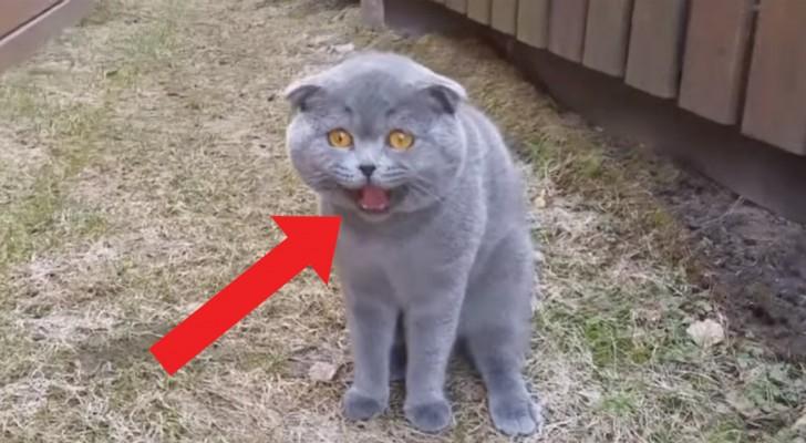 Das Frauchen fragt und die Katze antwortet: das Tier will immer und unbedingt das letzte Wort haben
