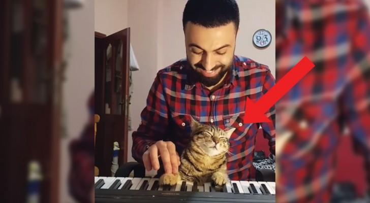 Un ragazzo suona la tastiera col gatto in grembo: l'espressione dell'Animale dice tutto