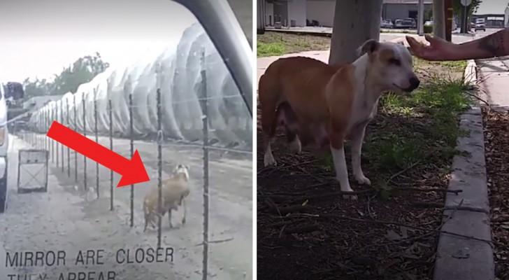 Ze zochten dagen naar deze hond, maar om haar pups te vinden, moeten ze eerst haar vertrouwen winnen!