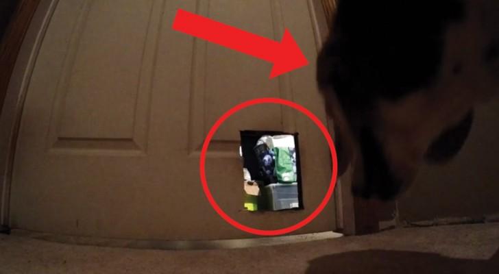Il cibo del gatto continuava a spariva: ciò che riprendono le telecamere non lascia spazio a dubbi