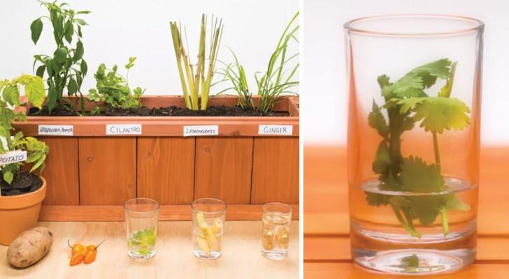 5 choses que vous pouvez facilement cultiver à la maison à partir de déchets alimentaires