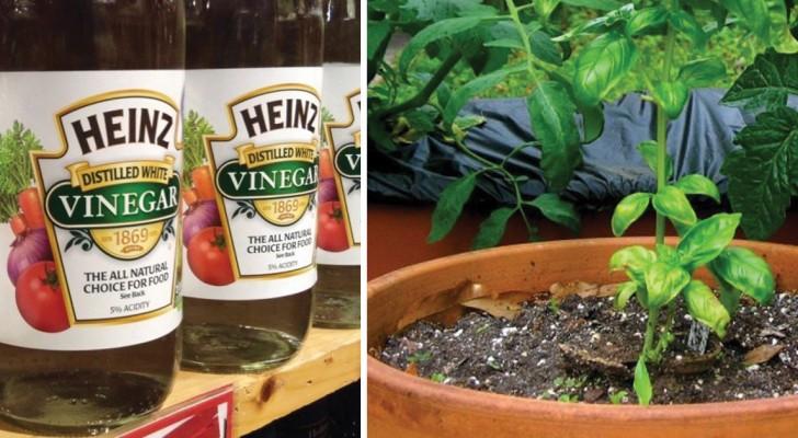 9 problèmes de jardinage que vous pouvez résoudre simplement avec du vinaigre blanc