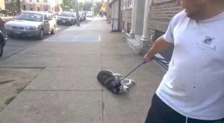 Trascina il cane che non vuole rientrare a casa: quando arrivano alla porta avviene la Magia
