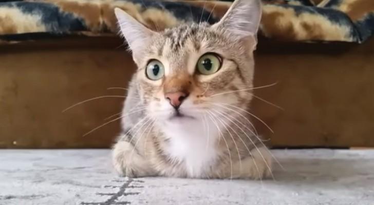 Video Di Gatti Guardachevideoit