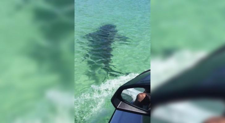 Ils voient une tache sombre dans l'eau: la volonté de s'approcher au plus près n'était pas très maline!