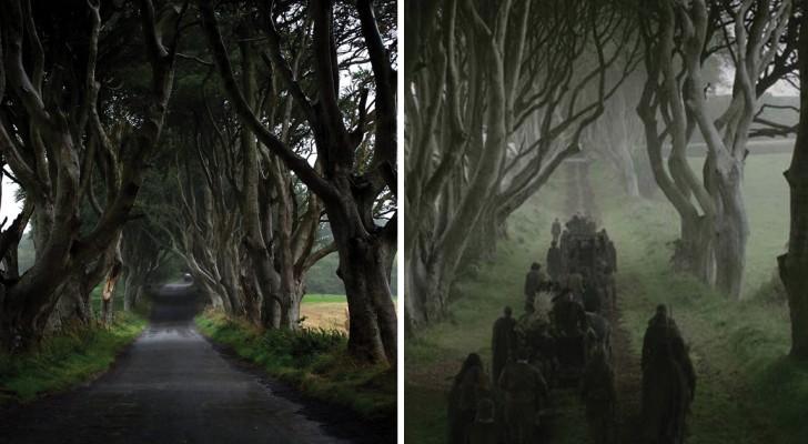 Il sentiero delle siepi oscure: una strada incantata nell'Irlanda del Nord che vi rapirà col suo fascino