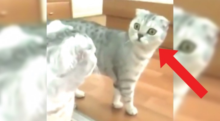 Watch and witness the moment when a cat finally realizes it is ... a cat!