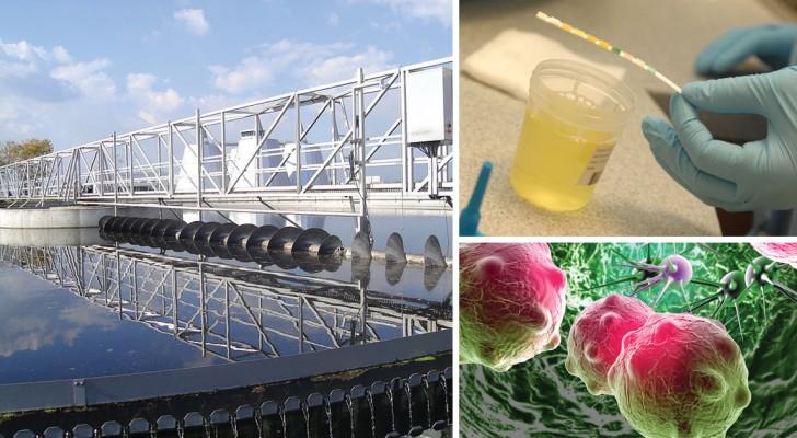 Alcuni studiosi scoprono come usare l'urina per produrre energia elettrica e acqua potabile