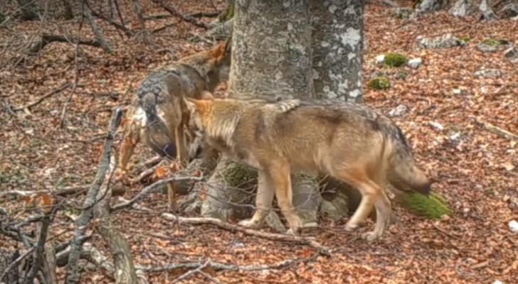 Une caméra cachée filme le même tronçon de forêt pendant 1 an: le résultat est magnifique