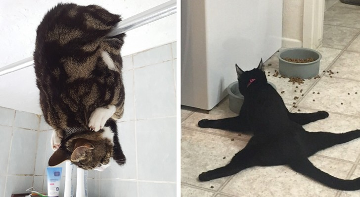 28 esilaranti foto di gatti che fanno cose assurde per la gioia di tutti noi