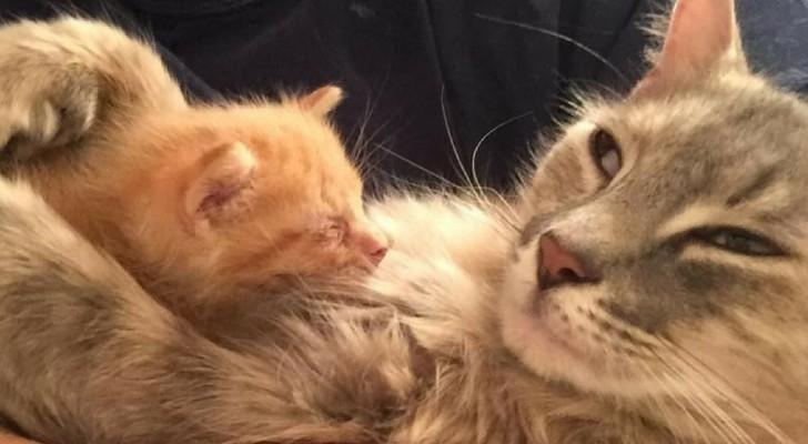 Una gatta depressa per la perdita dei suoi cuccioli trova la felicità in un gattino orfano appena nato