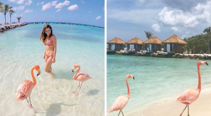 Mare cristallino e un tocco di rosa: scoprite la spiaggia in cui si può fare il bagno coi fenicotteri