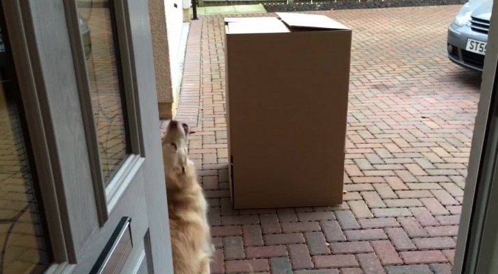 Seit geraumer Zeit hat sie ihren Hund nicht mehr gesehen: als sie aus der Kiste rauskommt, ist die Freude riesig