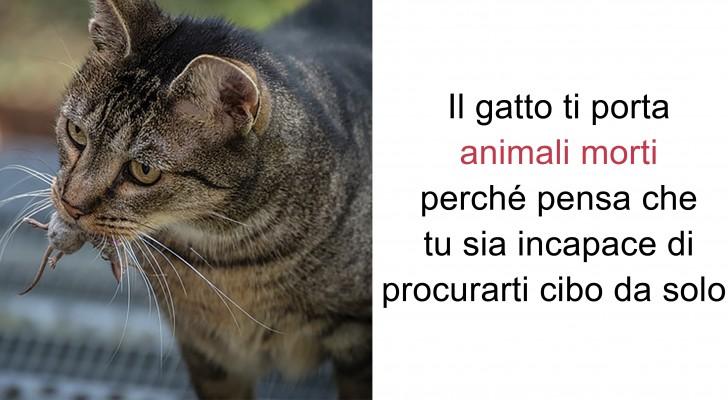 15 fatti curiosi sui gatti che ci rivelano alcuni aspetti affascinanti del loro carattere