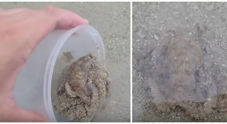 Hij redt een octopus op het strand, maar wat het dier na zijn redding doet is ongelooflijk!