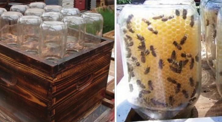 Deze man bedenkt een alternatieve manier om bijen te redden en honing te maken: iedereen is er weg van