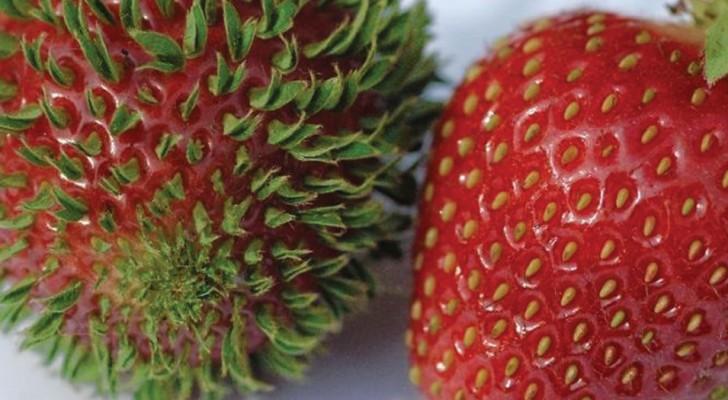 15 terrificanti immagini di quando frutta e verdura iniziano a germogliare molto presto