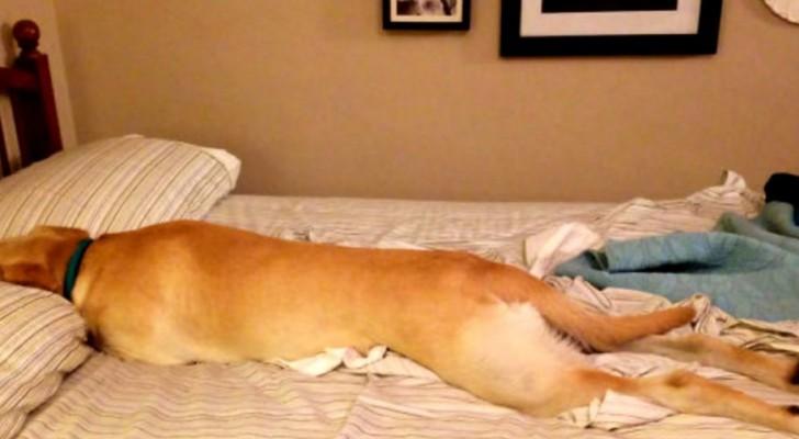 Wenn Hunde dein Bett besetzen: beim Anblick dieser Fotos werdet ihr dahinschmelzen