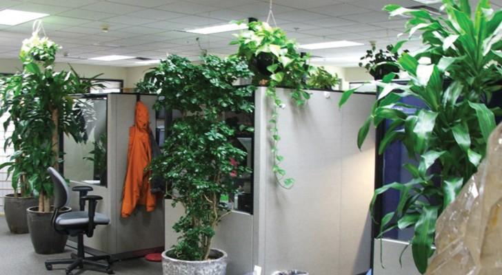 Le piante da appartamento ci rendono più intelligenti. Uno studio spiega il motivo