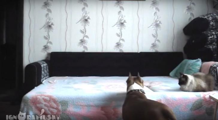 Cuando un perro queda en casa suele suceder esto!