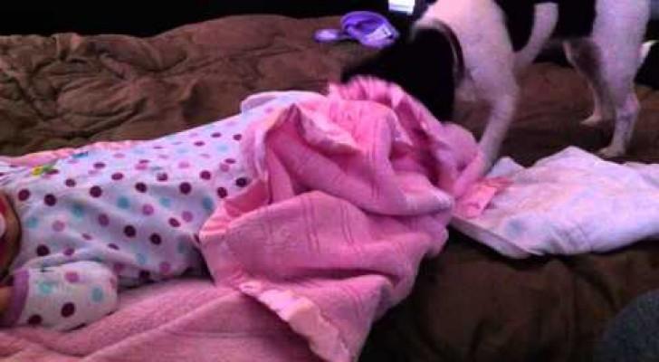 Increible instinto materno