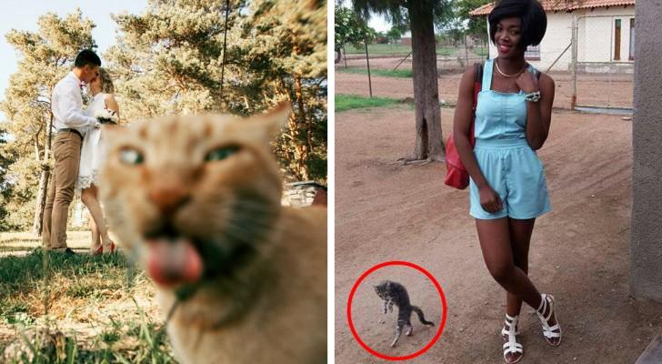 27 foto che l'intrusione dei gatti ha reso BELLISSIME