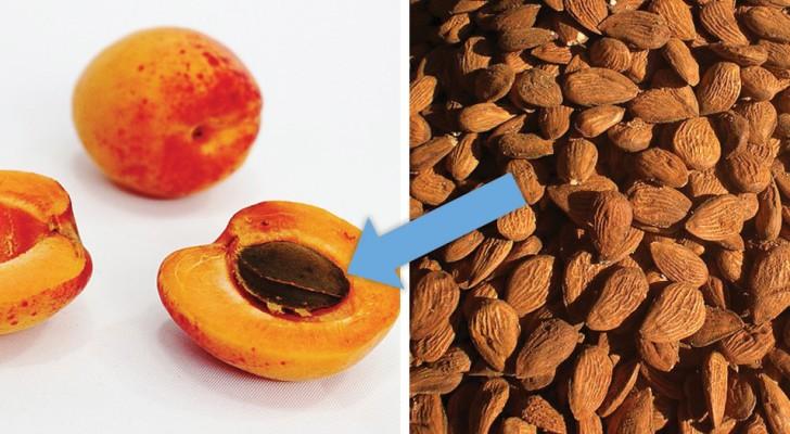 Rimane avvelenato da cianuro per aver mangiato semi di albicocche, credendo di sconfiggere il tumore