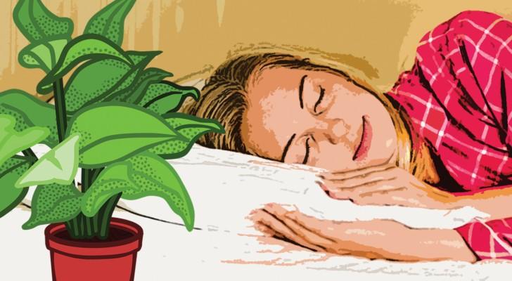 9 plantes avoir la maison pour bien dormir toutes les nuits. Black Bedroom Furniture Sets. Home Design Ideas
