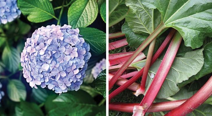 8 piante comuni che sono incredibilmente velenose
