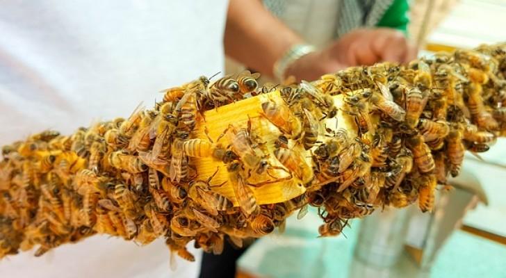 Les néonicotinoïdes sont présents dans le miel du monde ENTIER, une nouvelle étude le révèle.