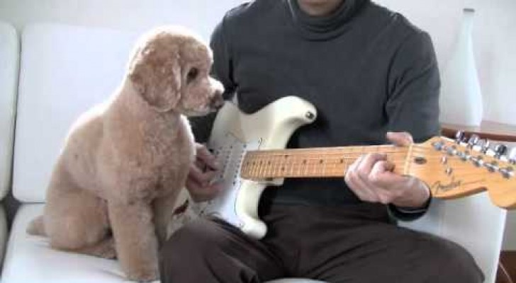 The dog playing the guitar