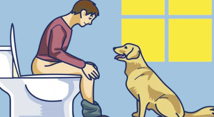 If your dog follows you into the bathroom, do not ignore them! Here is what they are trying to tell you!