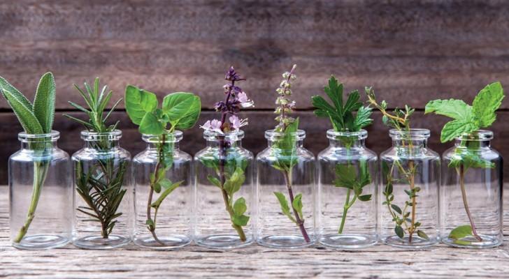 Här är 10 örter som du kan låta växa i vatten och ha färska i ett helt år