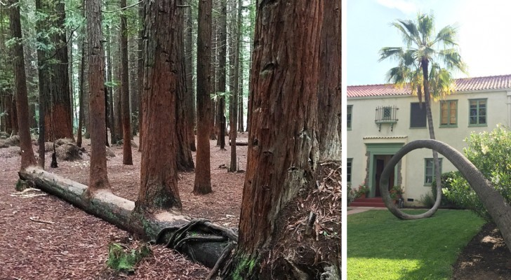 19 arbres qui n'ont pas l'intention de jeter l'éponge