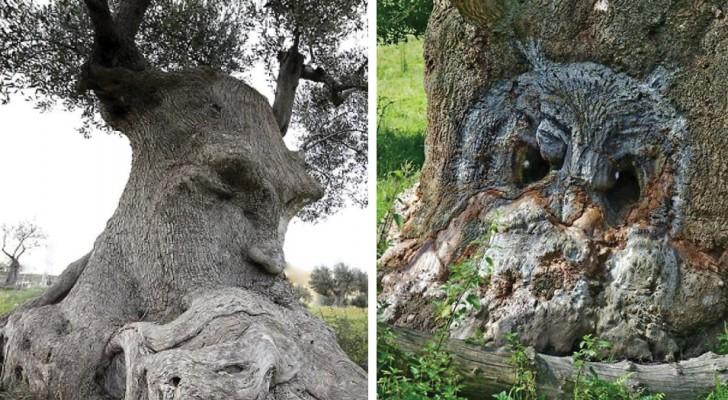 20 alberi che sembrano tutt'altro e che vi costringeranno a dare una seconda occhiata