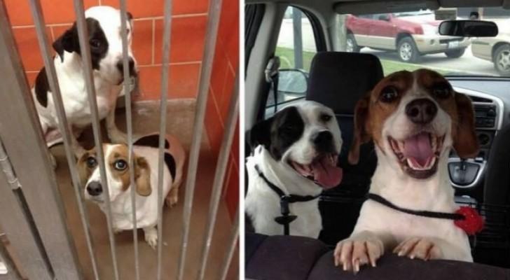 15 Fotos von Tieren vor und nachdem sie aus einem Tierheim abgeholt wurden