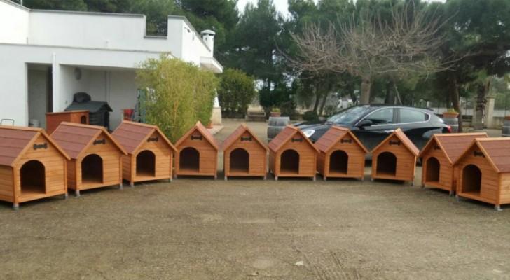 Deze Italiaanse gemeente heeft hondenhokken neergezet voor lokale zwerfhonden om hen te behoeden voor de kou
