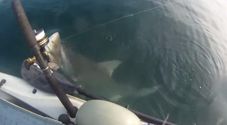 Hai überrascht Fischer auf dem Kanu
