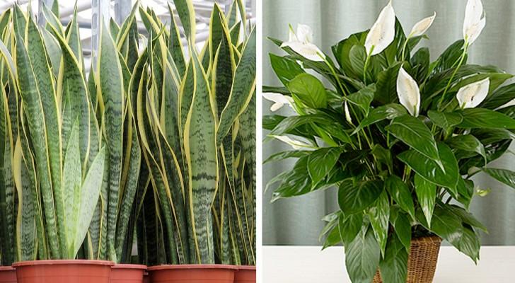 7 piante che miglioreranno la qualità dell'aria della tua casa