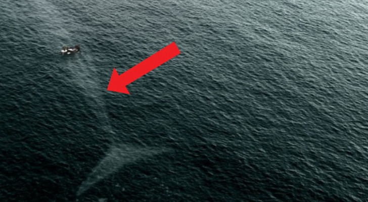 15 photos of Sea Monsters that will make you think twice before you dive into the sea