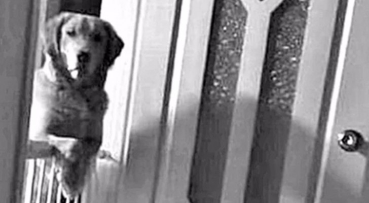 Un cane fissa tutte le notti i padroni: il motivo fa piangere la famiglia che lo ha adottato