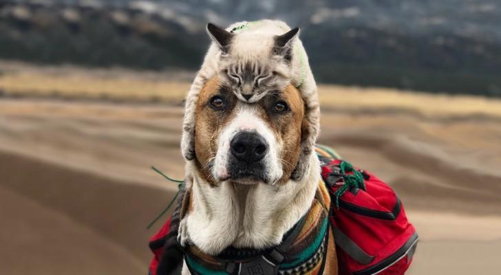 Deze hond en kat reizen graag samen en hun foto's zijn echt episch