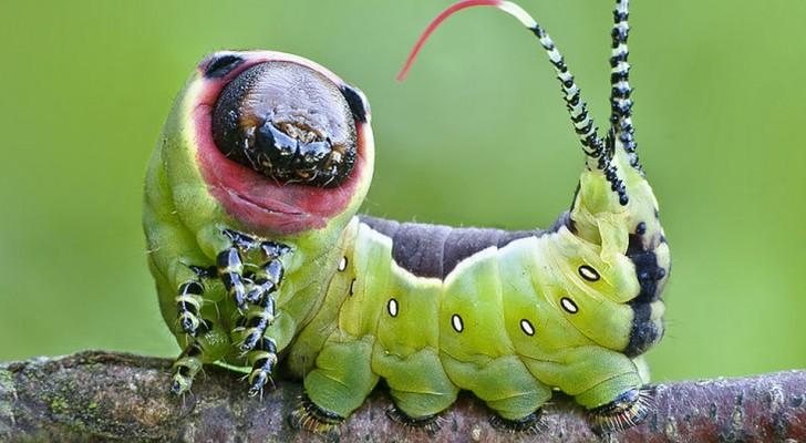 12 Insekten, die eine Laune der Natur sind