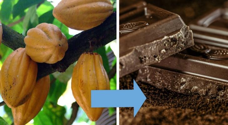 12 photos étonnantes nous montrent la VRAIE origine de certains aliments très communs