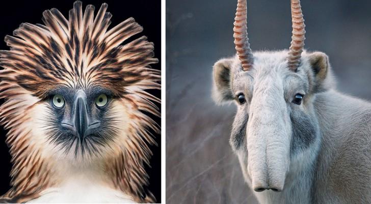 Un fotografo trascorre 2 anni a fotografare gli animali in estinzione: i suoi scatti vi spezzeranno il cuore